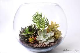 fishbowl diy u2013 california succulent