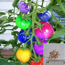 organic vegetable seeds ebay