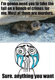 Cuteness Overload Meme - image 251216 cuteness overload know your meme