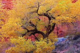 Sedona Map Oak Creek Canyon Scenic Drive Sedona Arizona