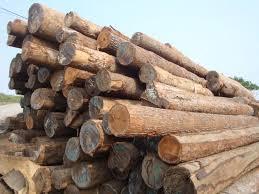 tropical wood log buy wood log product on alibaba