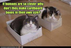 Cardboard Box Meme - if humans are so clever why don t they make cardboard boxes in
