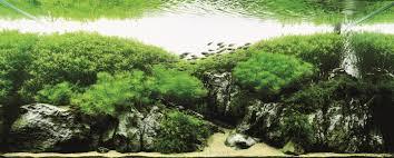 Takashi Amano Aquascaping Techniques Takashi Amano Kusuyama