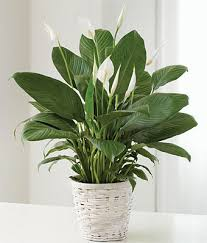 green plants green plant at from you flowers