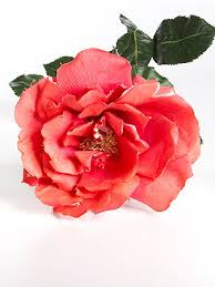 best flower delivery service images of flowers savingourboys info