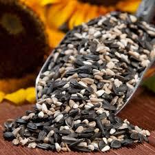 wild bird seeds drs foster and smith premium cardinal mix