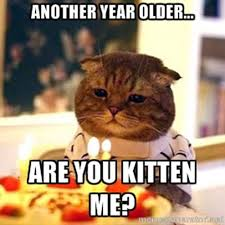 Best Funny Birthday Memes - another year older are you kitten me funny birthday meme