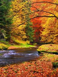 why do leaves change color in autumn wonderopolis