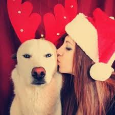 61 best christmas pets images on pinterest animals christmas
