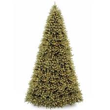 best 25 douglas fir tree ideas on douglas
