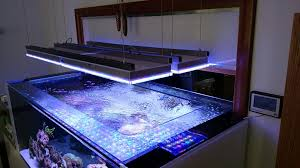 led aquarium lights for reef tanks new reef tank build uk using atlantik led light orphek