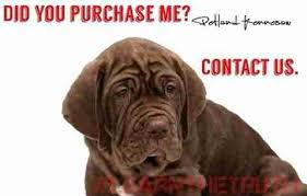 these are the photos petland doesn u0027t want you to see the dodo