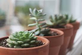 cute plant succulent image 2909664 by ksenia l on favim com