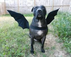 Halloween Costumes Dogs Bat Wings Dragon Wings Dog Halloween Costume Custom