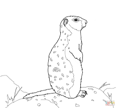 arctic ground squirrel stands on a rock coloring page free