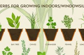 herb growing chart how to grow herbs simplemost