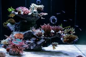 Aquascape Online Aquascaping Show Your Skills Page 3 Reef Central Online