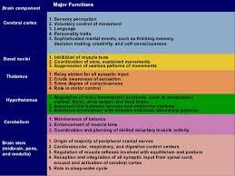 Role Of Brain Stem Central Nervous System