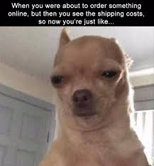Funny Chihuahua Memes - when you were about to order something online but then you see the