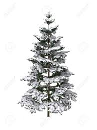 snowy tree on a white background stock photo picture and royalty