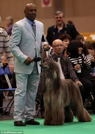 afghan hound judith light crufts 2013 pets and their owners take time out at crufts after