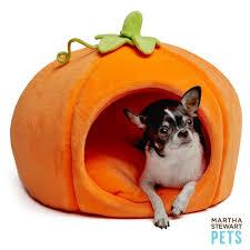 Petsmart Dog Bed It U0027s Pumpkin Season Benefits Of Pumpkin For Dogs Dog Mom Days