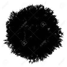 lime silhouette top view silhouette of small leaved lime tree isolated on white