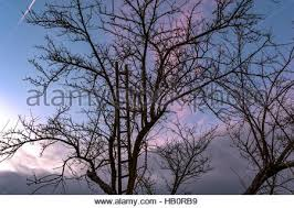 wooden ladder on sparse tree in front of cloudy sky stock photo