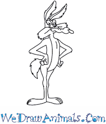 draw wile coyote looney tunes