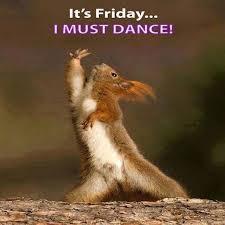 Friday Memes - meme friday animal friday best of the funny meme