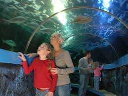 seaquarium rhyl days out with the