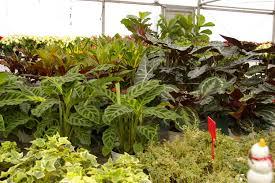 stam greenhouse oskaloosa iowa stamgreenhouse com