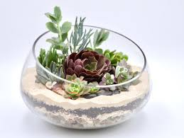 large succulent terrarium kit open glass vase succulent