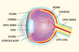 Picture Of Eye Anatomy Eye Rx Category Archives Anatomy