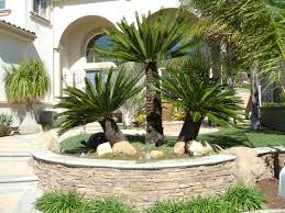 Tropical Landscape Design by Landscape Raised Plant Bed Garden With Palm Trees For Front