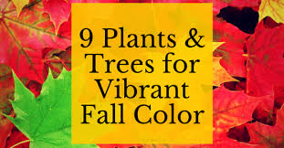 fall plants trees png