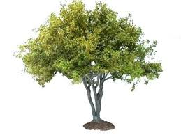 mini trees for landscaping small decorative trees for landscaping