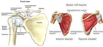Rotator Cuff Injury From Bench Press Mannequins For Sale What Is A Good Diet Breakfast Shoulder Pain