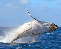Hawaii wildlife tours images Best 25 whale watching hawaii ideas whale watching jpg