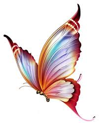 colorful butterfly design sle