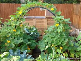 Vegetable Garden In Winter by To Grow Winter Squash Vertically A Stong Trellis Arbor Is A Must