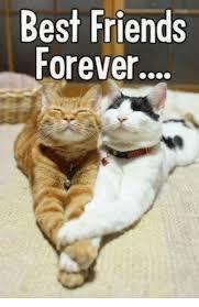 Best Friend Meme Funny - 25 best memes about best friend best friend memes