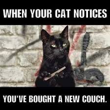 Crazy Cat Meme - when your cat notices you ve bought a new couch animals