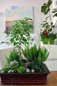 indoor plant arrangements combining houseplants for decorative arrangements