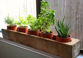 Window Sill Planter by Best Herbs For Kitchen Window Sill Caurora Com Just All About