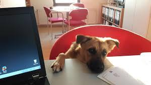 Baden Badener Versicherung Tierhalterhatfpflichtversicherung Tier Op Versicherung
