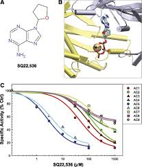 isoform selectivity of adenylyl cyclase inhibitors
