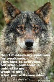 iberian wolf canis lupus signatus wolf and wolf spirit