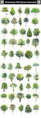what is included in architectural plans best 25 architectural trees ideas on pinterest wall murals uk
