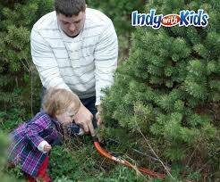 christmas tree farms in indiana central indiana and indy cut
